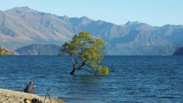 """人干事?新西兰最著名的树被游客锯断,曾被认为是""""希望象征"""""""