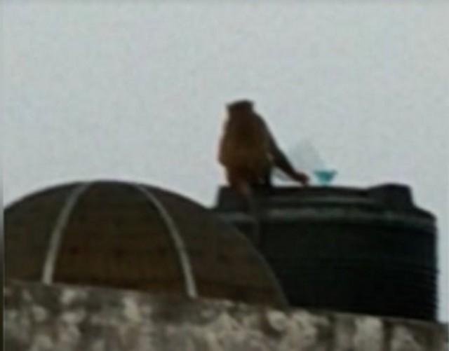 印度猴子在屋顶放风筝,当地官员:因疫情封锁 猴子进化得很快  第1张