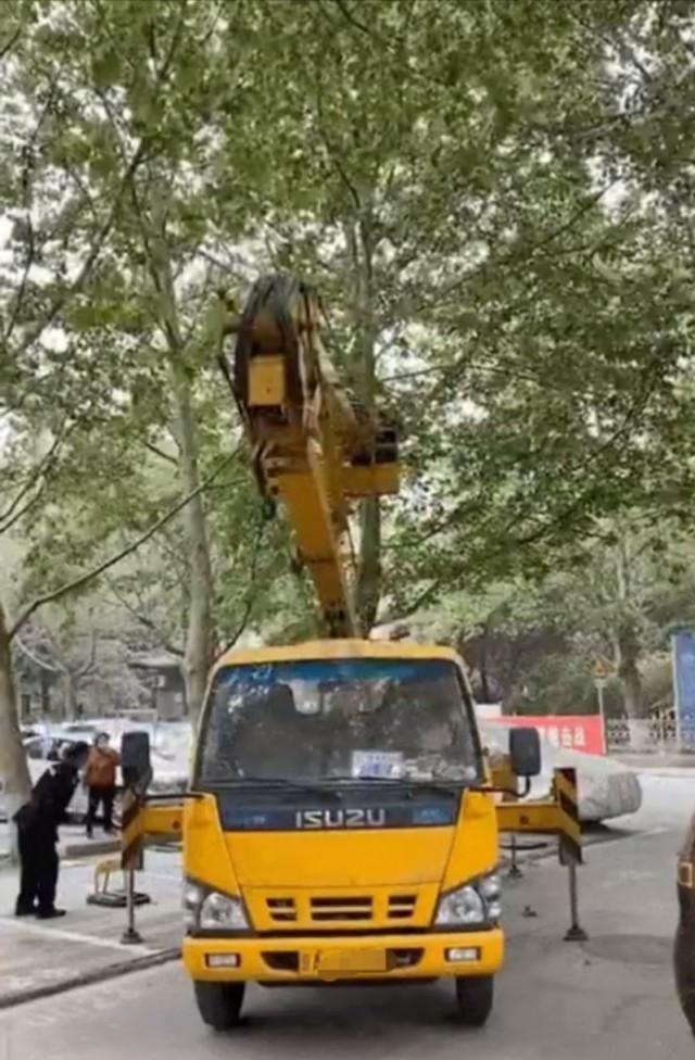 """北京丰台通告""""鸟屎掉别人车里后鸟窝被拆""""恶性事件  第1张"""