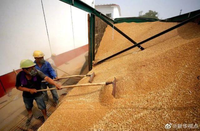喜讯!今年全国性夏粮总产值比上年提高0.9%  第1张