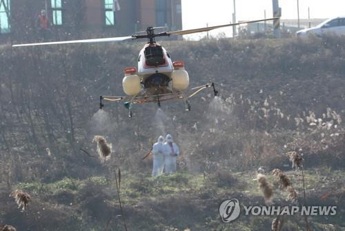 韩国爆发了一场高致命性的禽流感,造成40多万只家禽死亡。  第2张