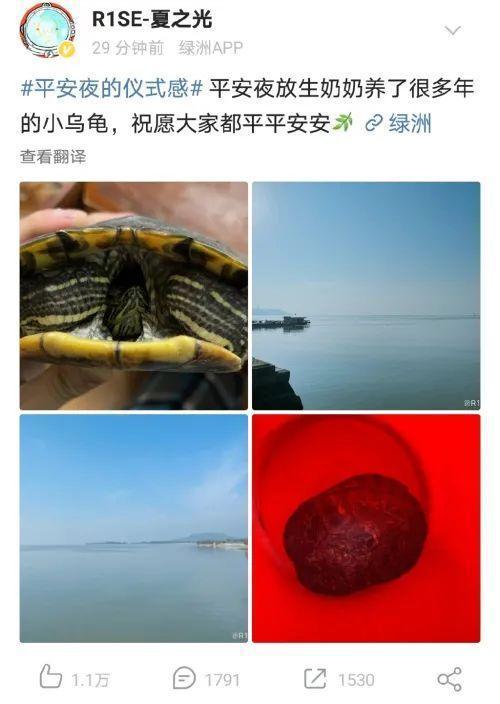 男星平安夜放生巴西龟,科普v说:很好。  第1张
